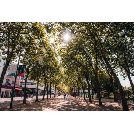©Lezbroz-LBST - La rambla Loïc Le Page et le parc Jules Ferry de Lorient