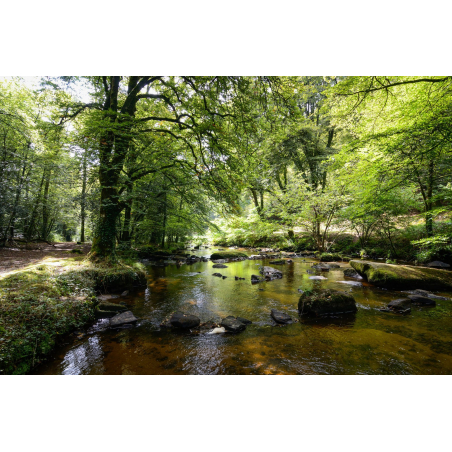 ©Emmanuel Lemée-LBST - La forêt de Pont Calleck en vallée du Scorff