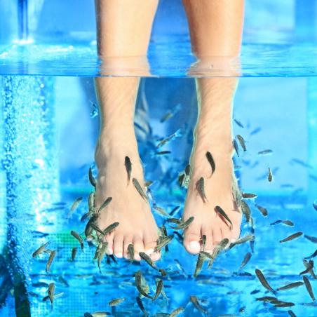 ©Les pieds dans l'eau - Fish pédicure